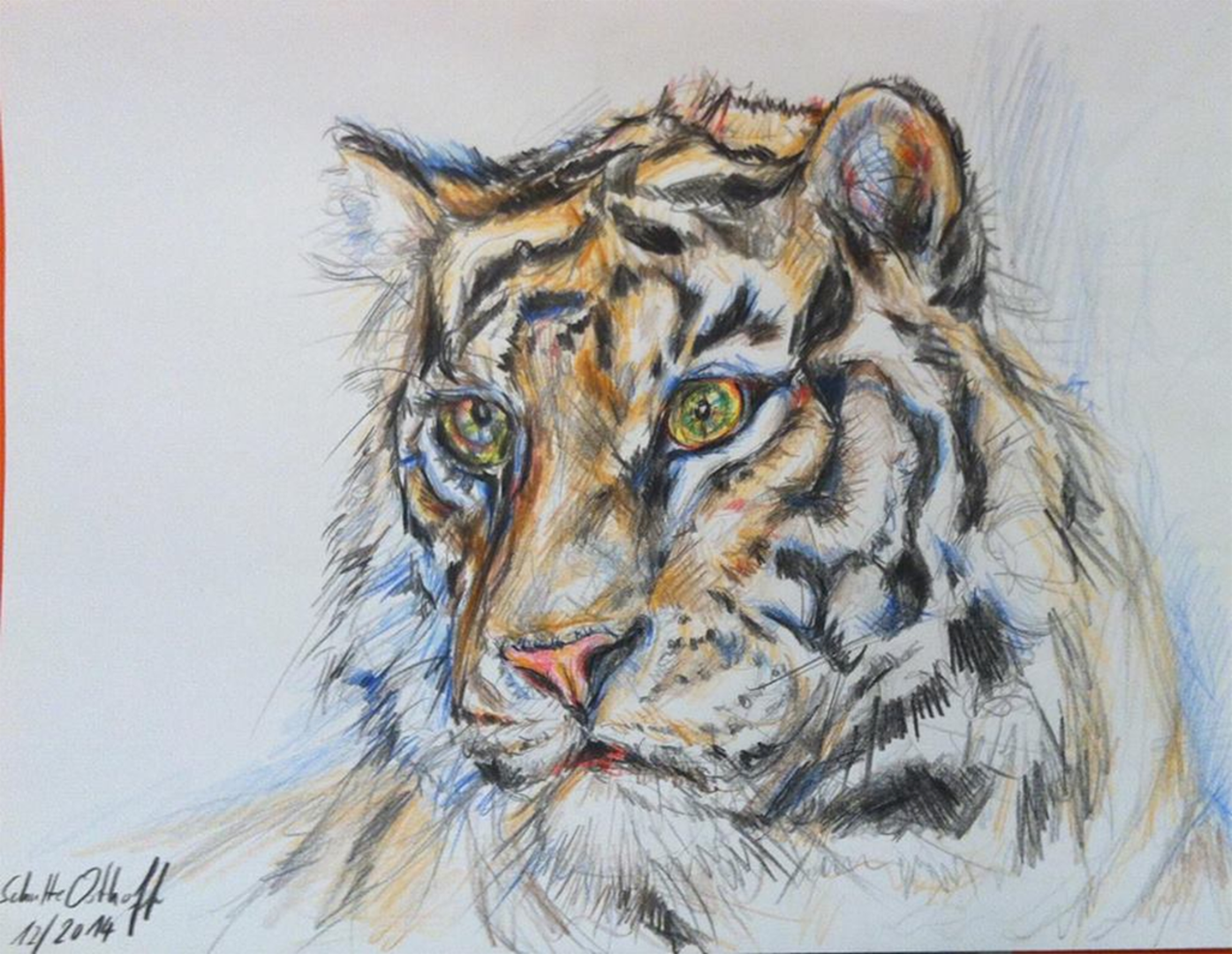Tiger_Buntstift_DINA4_12_2014